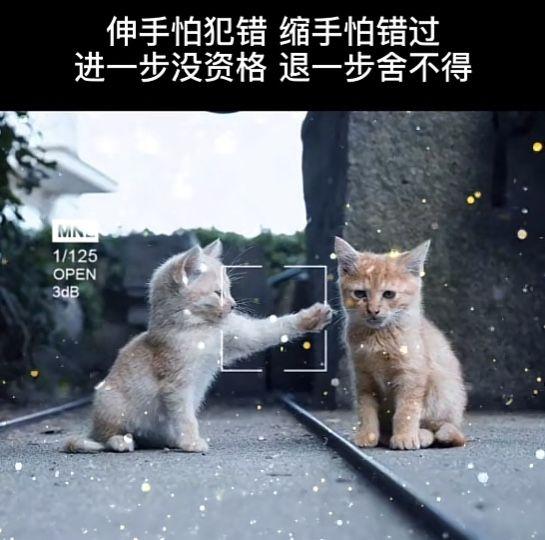 伸手怕犯错缩手怕错过更没有资格后退一步 不愿与两只猫分享背景图片图3