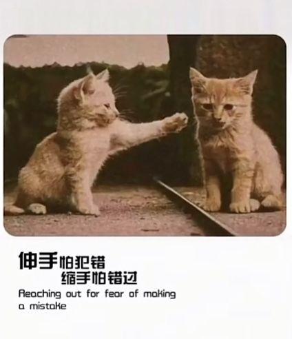 伸手怕犯错缩手怕错过更没有资格后退一步 不愿与两只猫分享背景图片图1