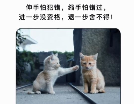 伸手怕犯错缩手怕错过更没有资格后退一步 不愿与两只猫分享背景图片图0