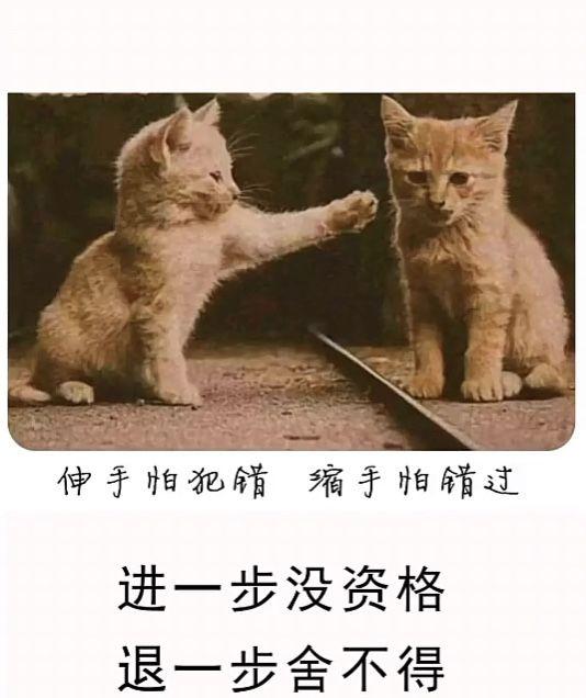 伸手怕犯错缩手怕错过更没有资格后退一步 不愿与两只猫分享背景图片图2