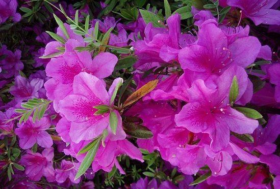 花中西施指的是谁 花中西施是什么花名蚂蚁庄园[多图]图片3