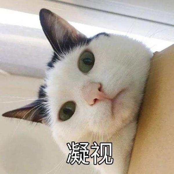 颤音猫猫又能有什么坏心眼表情包GIF版分享图3