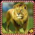 野生狮子愤怒报复中文版破解版