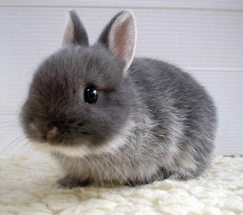 兔子喜欢吃什么食物?兔子更喜欢胡萝卜还是牧场蚂蚁庄园